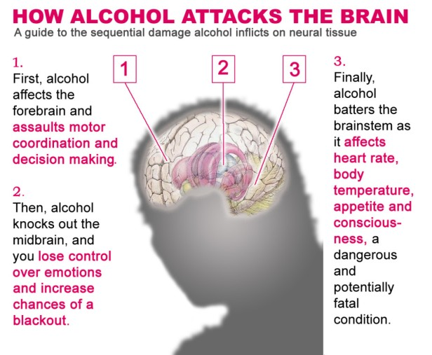 alcohol-the-brain-1024x844