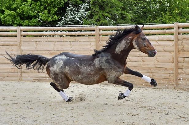 Gallop Run Horse Play